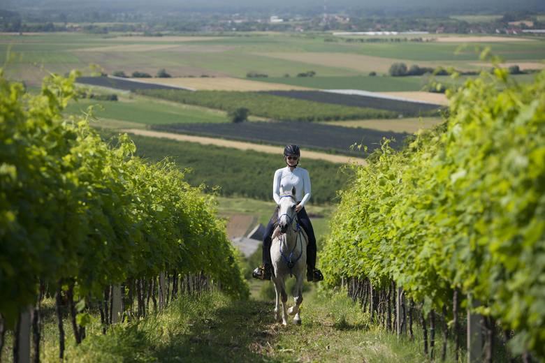 Slawonia to także malownicze winnice