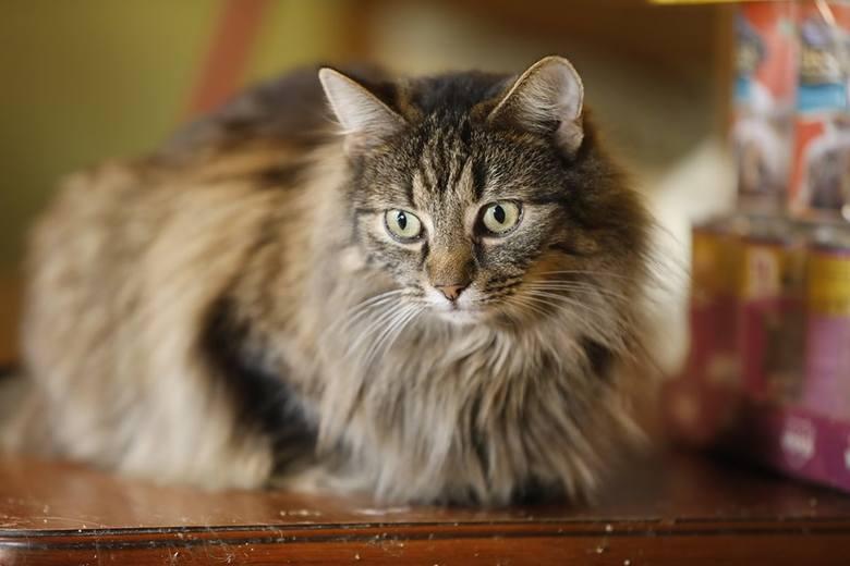 Witajcie w kocim królestwie pani Józefy. W jej domu przebywa nawet 100 zwierząt [GALERIA]