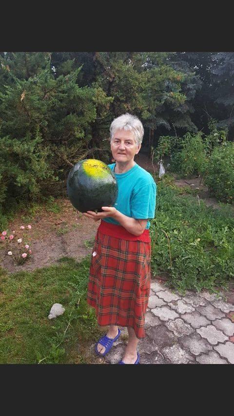 SŁUBICE Jadwiga Neugebauer wyhodowała w swoim ogródku arbuzy giganty. - Są takie duże! - mówi z radością kobieta