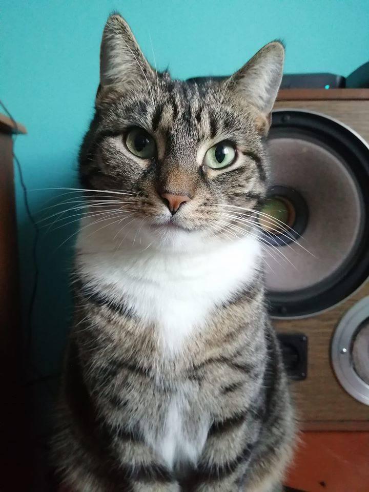 Dzień Kota 2020. Zobacz ZDJĘCIA kotów naszych Internautów, 17 lutego Dzień Kota