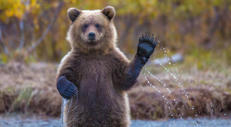 Znani na całym świecie mieszkańcy ZOO. Niezwykłe zwierzęta stały się ulubieńcami odwiedzających. Czym zasłynęły?