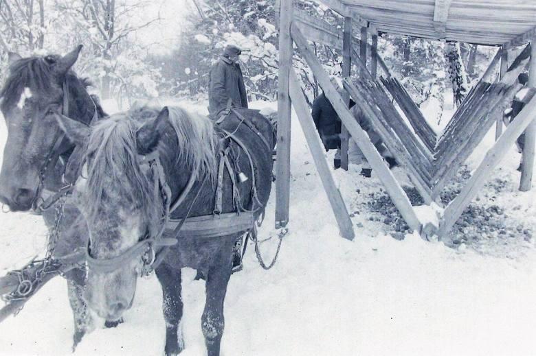 Zima stulecia przy paśniku niedaleko Słupska.