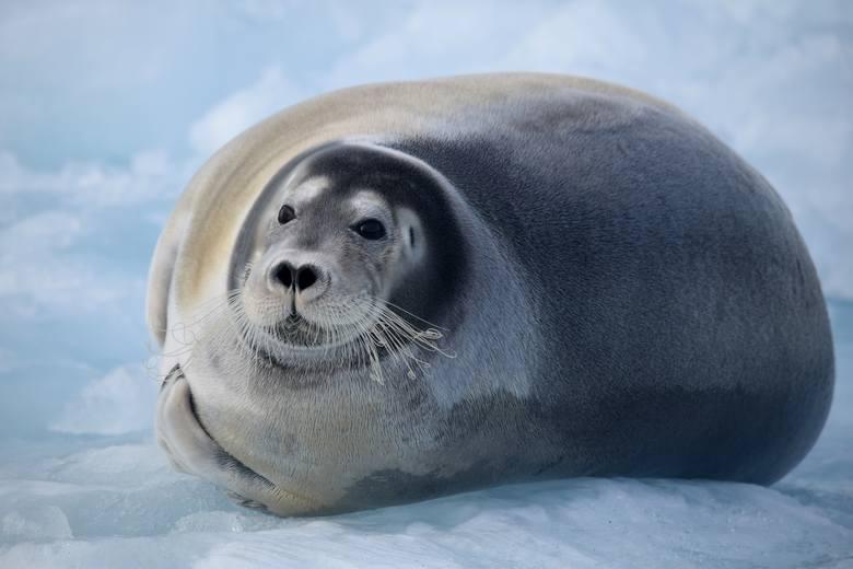 Naukowcy z UMK mają bazę na Spitzbergenie [zdjęcia]