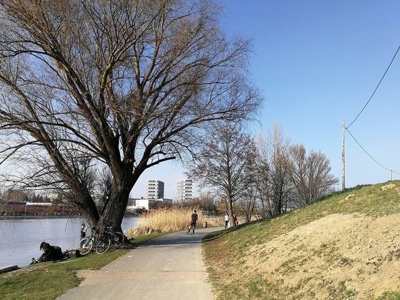 Wycinka 64 drzew przy Żwirowni w Rzeszowie skutkiem kontrowersyjnej zamiany działek. Dlaczego radni na to pozwolili?