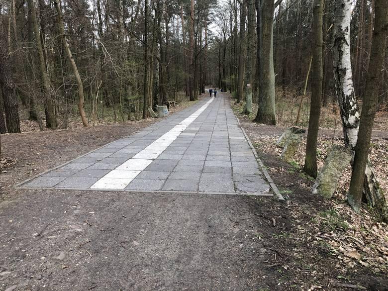 Niedokończony leśny deptak, który miał połączyć osiedla Zacisze i Leśne. Mieszkańcy wciąż liczą, że druga część ścieżki pieszo-rowerowej zostanie wy