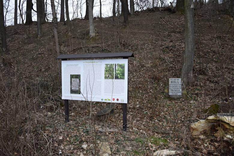 """Pomnik książęcego konia Ralla w Tarnawcach koło Krasiczyna. Znajduje się tuż przy drodze. Orientacyjne miejsce na mapie:49°47'27.5""""N 22°39'16.6""""EW"""