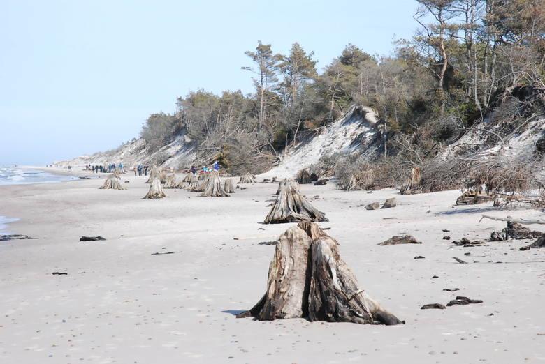 Martwy las na plaży w SPN. Jak tam dotrzeć?