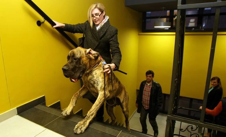 Wrocławscy adwokaci chcą wyższych kar za cierpienie zwierząt. Na spotkanie przyszli z psami