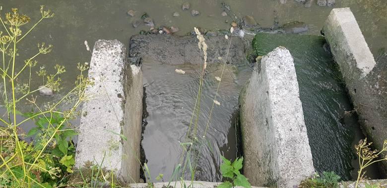 Rzeka Horodnianka jest zanieczyszczona ściekami. Inspektorzy ochrony środowiska pobrali próbki do badań