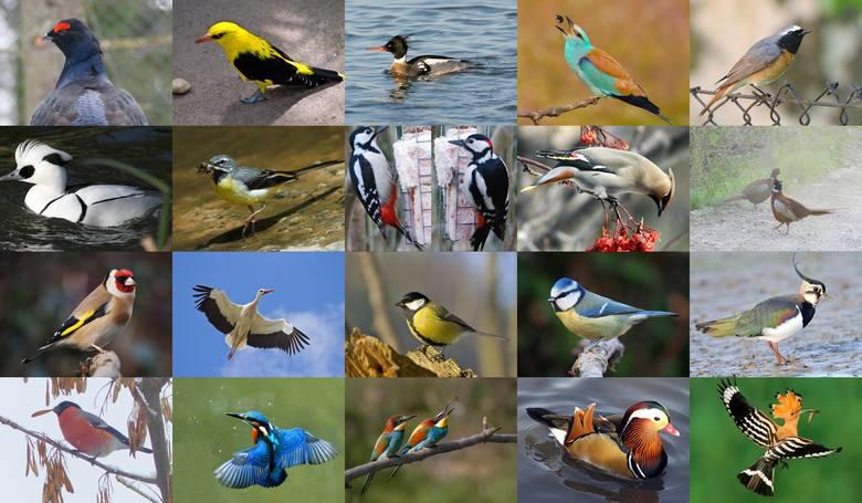 Choć ornitologia jest w Polsce coraz popularniejsza (w Wielkiej Brytanii to wręcz narodowe hobby), większość z nas nie przygląda się ptakom, które żyją
