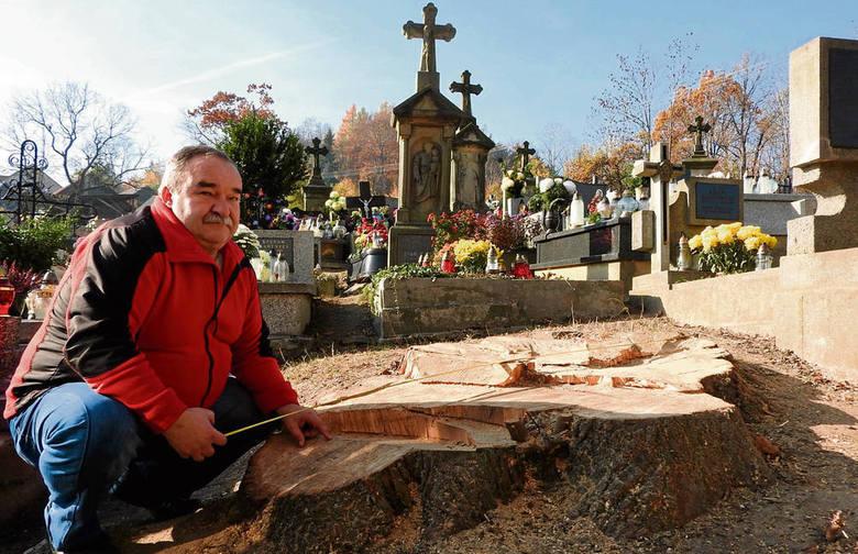 Na cmentarzu posadzono teraz m.in. 14 lip. Mieszkańcy długo będą musieli czekać aż wyrosną