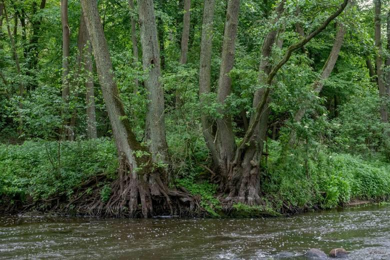 Wełna to rzeka mająca cechy rzeki górskiej. Rocznie odbywa się tu kilkaset spływów kajakowych.