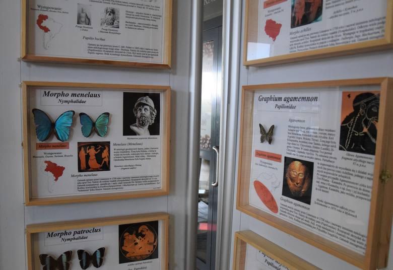 Wystawa winobraniowa egzotycznych owadów i pajęczaków Jerzego Turzańskiego.