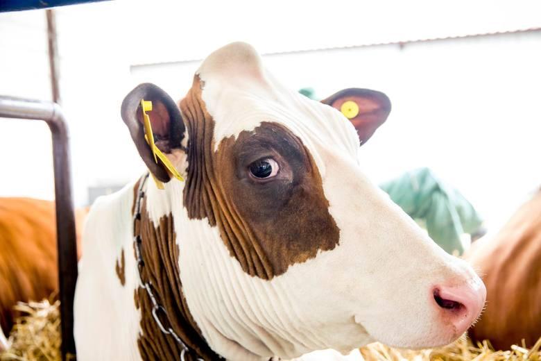 Dotychczas takie usługi jak prowadzenie ksiąg hodowlanych czy prowadzenie oceny wartości użytkowej lub hodowlanej zwierząt gospodarskich były subsydiowane.