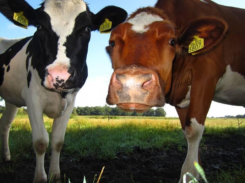 Trzech na czterech przetwórców mleka jest w bardzo dobrej lub dobrej kondycji finansowej?