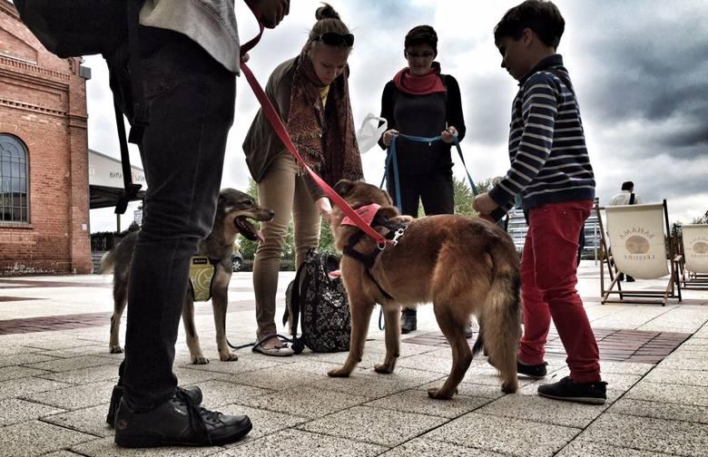 Koniec zakazu wprowadzania psów do SCC