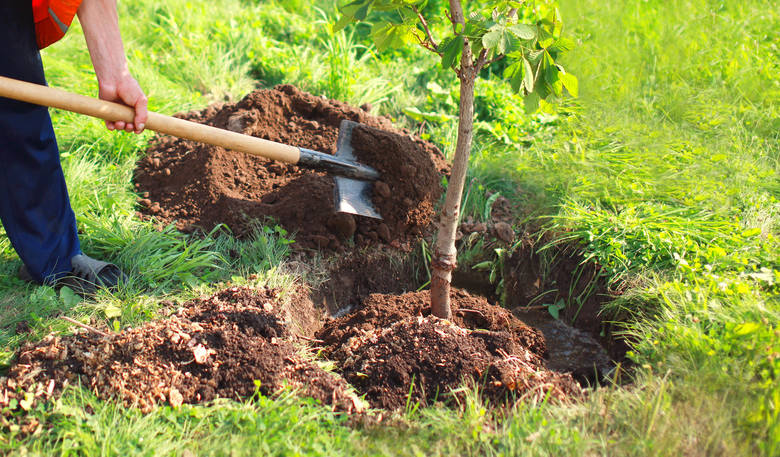 Ekologiczne rozwiązania w ogrodzie