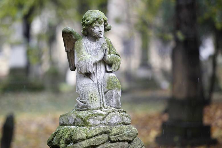 Stary Cmentarz w Rzeszowie [ZDJĘCIA]