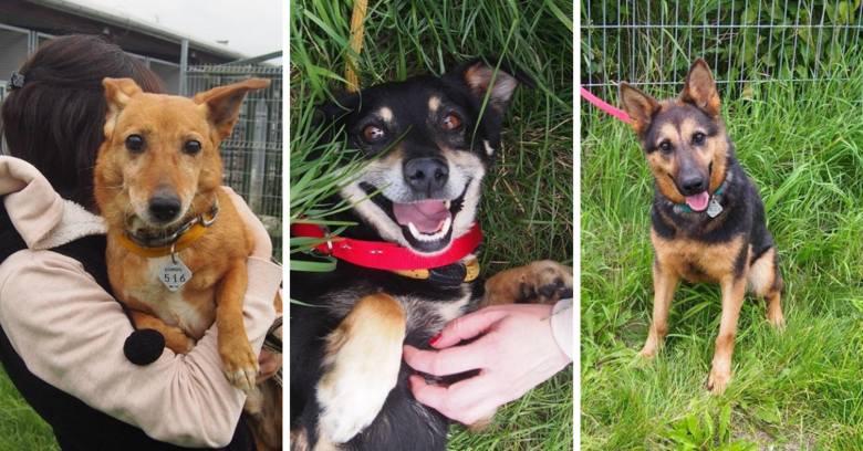 Są cudowne, szukają domu, może znajdą go u Ciebie? Dwanaście psów uratowanych ze schroniska w Radysach czeka na dom we Wrocławiu. Dziś przebywają w Schronisku