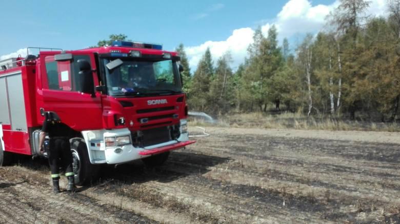 11 zastępów straży pożarnej gasiło pożar nieopodal Radyni w powiecie głubczyckim. Spaleniu uległo 14 hektarów jęczmienia oraz 1 hektar młodnika. W działaniach