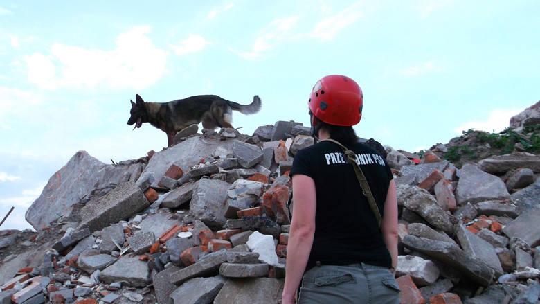 W ciągu ostatnich lat psy z OSP Gdańsk wyjeżdżały do akcji niemal 200 razy