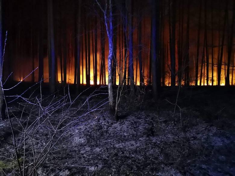 We wtorek wieczorem dwa zastępy OSP Lubiszyn udały się do pożaru lasu w okolicach Lubna. Pożar udało się szybko opanować. Spaleniu uległy około 34 ary