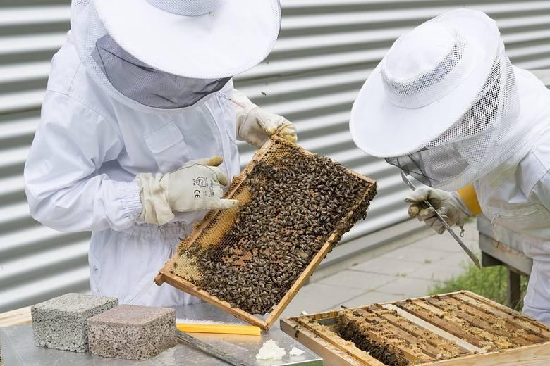68 tysięcy pszczelarzy w Polsce. Na jaką pomoc mogli liczyć?