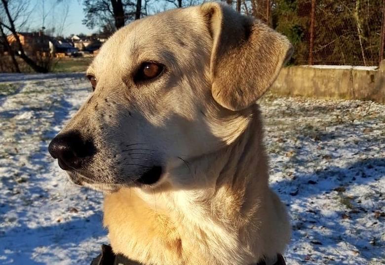 Czytelniczka przygarnęła bezpańskiego psa. Szuka dla niego domu