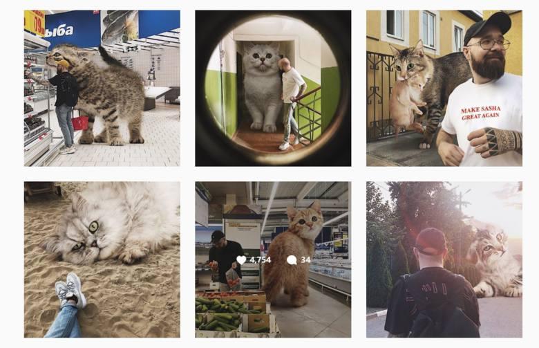 Kochacie koty? A gdyby świat zamieszkiwały ogromne koty? Zobaczcie zdjęcia - fotomontaże wykreowane przez rosyjskiego grafika. Andrej Scherbak z Rostowa