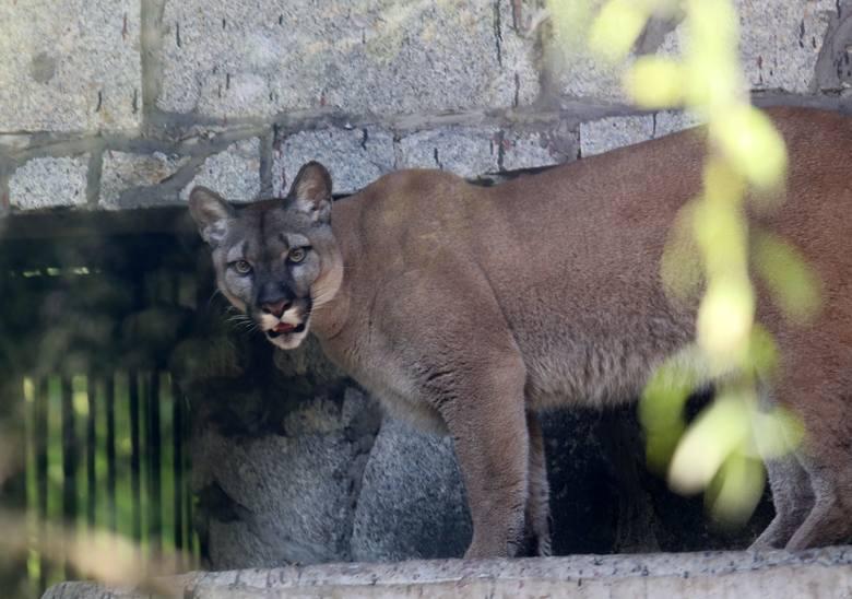 Lato w Śląskim Ogrodzie Zoologicznym Zobacz kolejne zdjęcia/plansze. Przesuwaj zdjęcia w prawo - naciśnij strzałkę lub przycisk NASTĘPNE