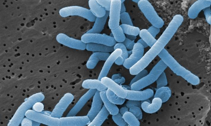 Bakterie te znajdują się przede wszystkim w pochwie - odpowiadając za jej prawidłowe pH. Gdy wyeliminujemy Lactobacillus - możemy doprowadzić do grz