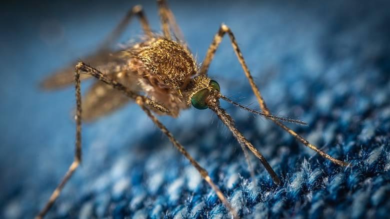 4.KOMARJeden z najbardziej uciążliwych owadów na  świecie. W tropikach przenosi malarię, która śmiertelną dla ludzi chorobę. U nas złaknione ludzkiej