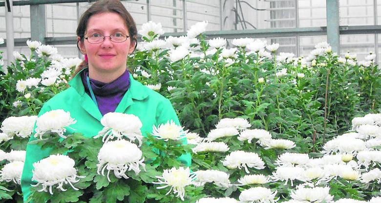 Katarzyna Macios z Rejonowego Przedsiębiorstwa Zieleni i Usług Komunalnych prezentuje  nowość w tym sezonie, chryzantemę wielkokwiatową, odmianę Angelys o białych kwiatach.  <br /> <br /> <br />