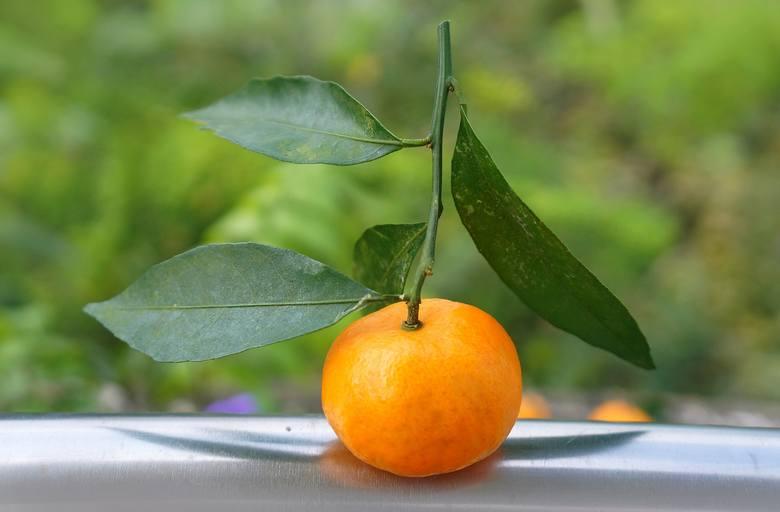 Na diecie DASH między posiłkami można przekąsić mandarynkę lub inny owoc, których nie zjadło się w ramach posiłku.