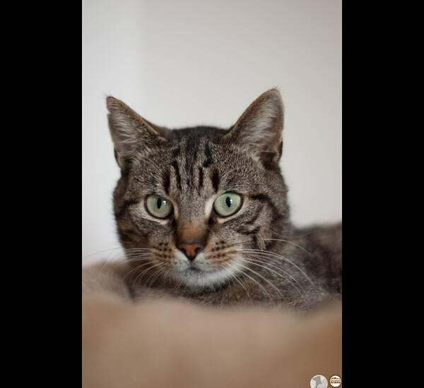 Ricant, jak mówią pracownicy schroniska, to bardzo miły i kochany wręcz kot. Uwielbia głaskanie pod brodą, dobrze dogaduje się z innymi kotami. Umie korzystać z kuwety.