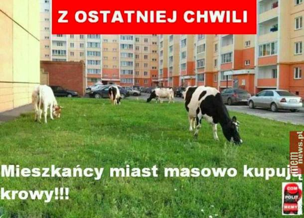krowa plus 500 plus na krowę 600 plus na krowę program krowa 500 plus 2020
