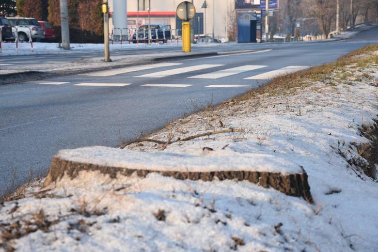 Przy ulicy Żorskiej w Rybniku ścięto 16 drzew. Powstanie tu droga rowerowa