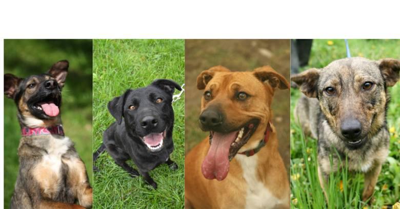 """W naszej akcji """"Okaż serce. Daj dom"""" prezentujemy 13 psiaków z krótki opisami i kontaktem do wolontariusza. Szukamy domu, w którym"""