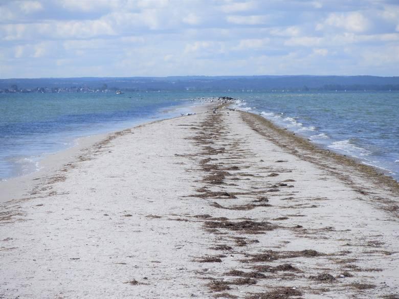 Wreszcie jednak dopływa się Rybitwiej Mielizny - piaszczystej wyspy na środku Zatoki Puckiej o długości kilku kilometrów i szerokości kilku metrów