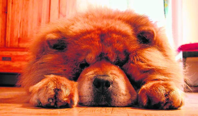 Większość psów ma duże zdolności wokalne, ale żeby zrozumieć to, co mówią, trzeba też śledzić mowę ich ciała