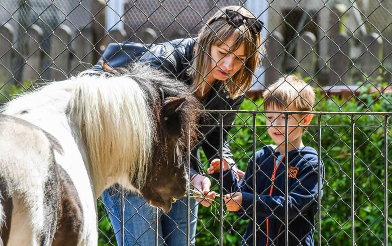 W Myślęcinku Dzień Dziecka już trwa! Najmłodsi wraz z opiekunami odwiedzić mogą m.in. Ogród Zoologiczny, którego mieszkańcy zawsze wzbudzają sympatię