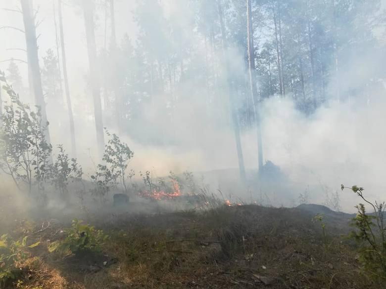 Strażacy z OSP Wasilków i OSP Jurowce w niedzielne popołudnie walczyli z pożarem lasu, do jakiego doszło w okolicach Świętej Wody na Podlasiu. Spaliło