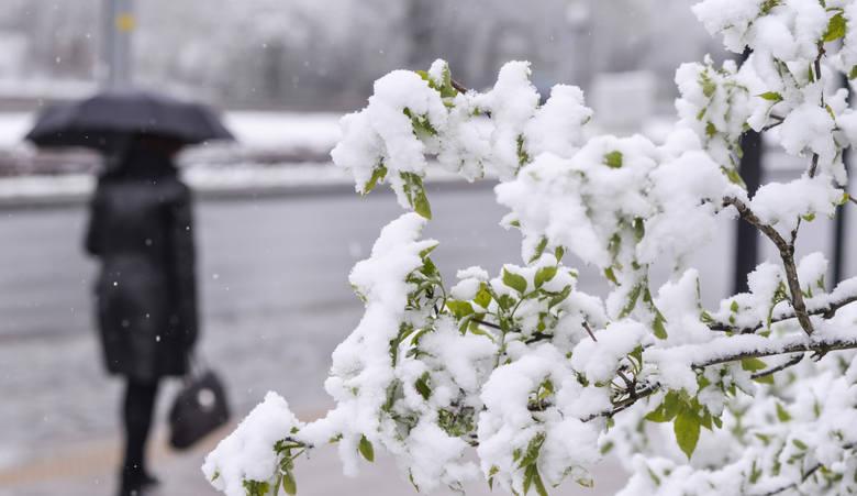 Jakiej zimy możemy się spodziewać w tym roku? Czy spełnią się prognozy o zimie stulecia i czekają nas mroźne i białe święta? A może nici z zimy pełnej