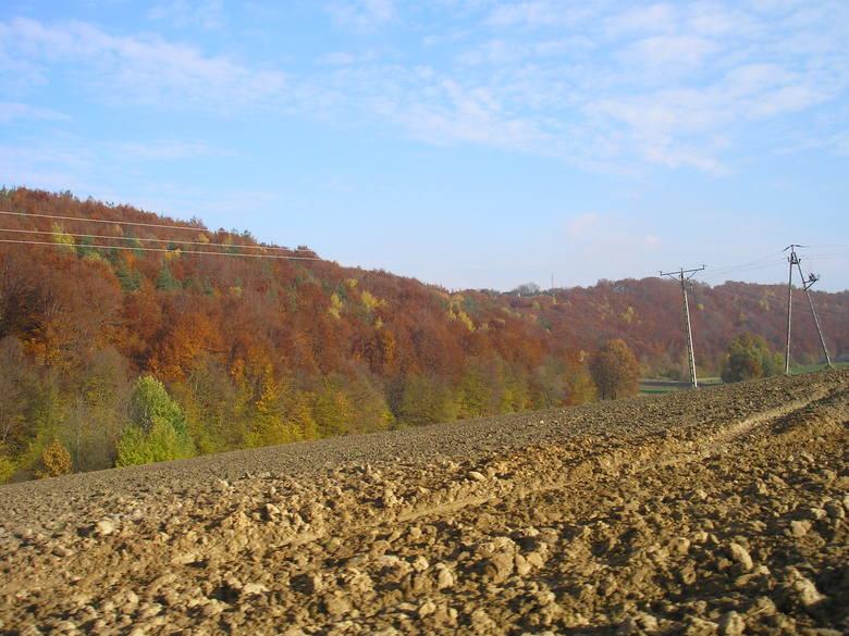 Gleby w Polsce. 90 proc. powierzchni kraju to grunty rolne i leśne. Na mieszkańca przypada prawie hektar ziemi