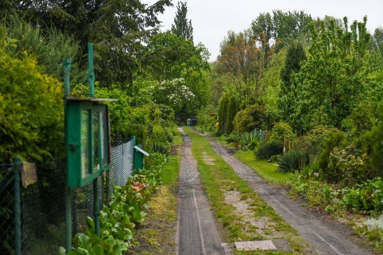 """Działkowcy z ROD """"Bogdanka"""" mogą niedługo stracić swoje ogrody, z kolei anarchiści skłot, który w mieście funkcjonuje od 25 lat. W lutym rozpoczęła się egzekucja komornicza, która może zakończyć się licytacją działki na Sołaczu. Według operatu jej szacunkowa wartość wynosi prawie 6 mln zł."""
