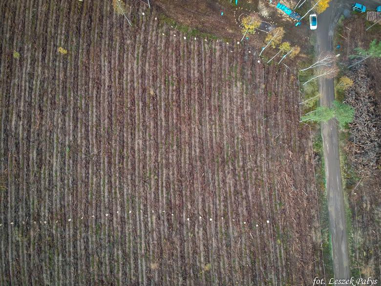 Niemal 6 ha odnowiono podczas sobotniej akcji w Nadleśnictwie Lipusz (RDLP w Gdańsku). We wspólnym z leśnikami sadzeniu drzew wzięli udział pracownicy