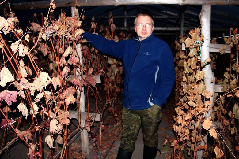 """""""Winnica Na Leśnej Polanie"""" zawiera w sobie różnorodne gatunki winorośli, z których powstaje doceniane wino. Odwiedzający tam goście"""