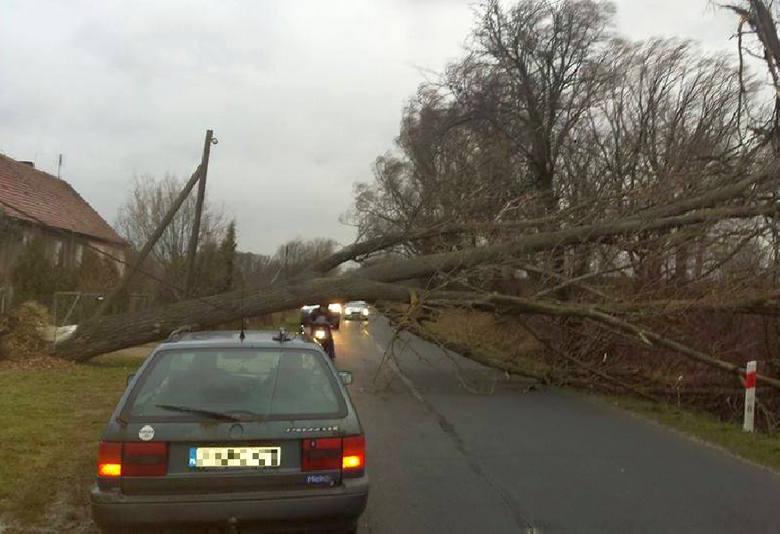 Zwalone drzewo na drogę w miejscowości Biecz w powiecie żarskim.