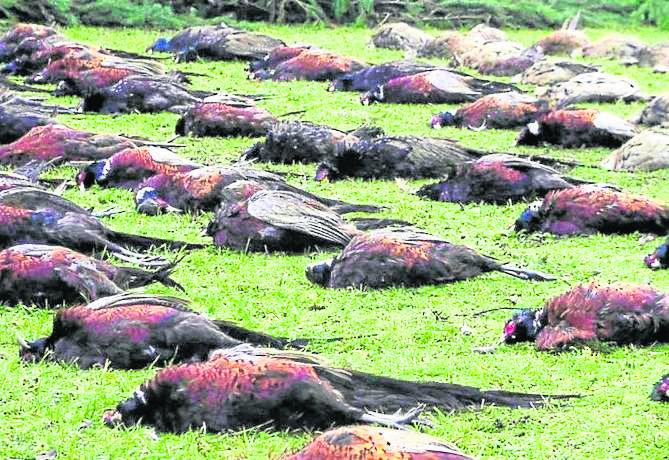 Minister Szyszko twierdzi, że musi uczestniczyć w polowaniach, bo jego obowiązkiem jest znajomość funkcjonowania łowiectwa.
