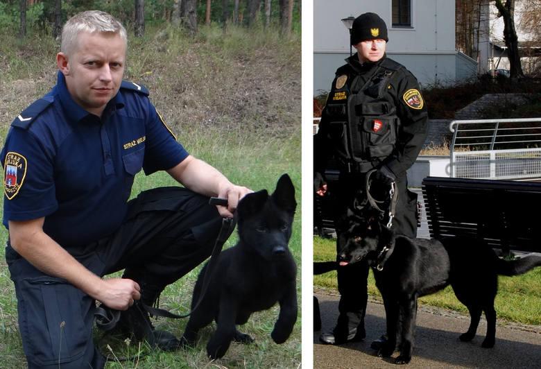 """Bary jest jednym z dwóch najmłodszych """" funkcjonariuszy"""" Straży Miejskiej w Bydgoszczy. Po intensywnym szkoleniu i uzyskaniu niezbędnych"""